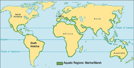 Marine animals and biomes this is the largest biome in the world it covers around 70 of earth and over 90 of the life on earth lives in the ocean marine areas are very salty gumiabroncs